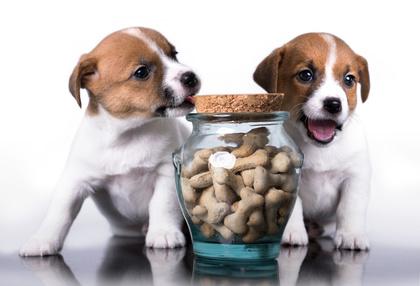 Hundefutter auf Rechnung