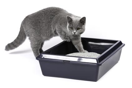 Katzenstreu Test