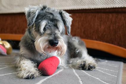 Hundekrankenversicherung Vergleich