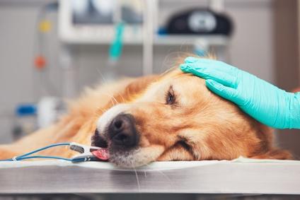 Hundeversicherung OP