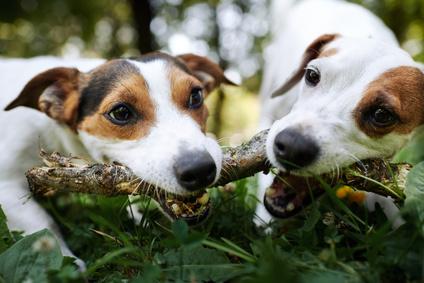 Krankenversicherung für Hunde